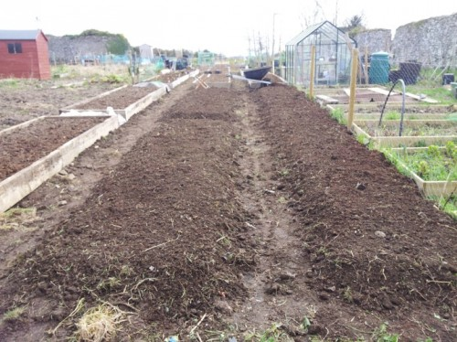This will be sweetcorn, a place to experiment with willow, and other such like.