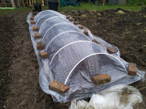 A cheap row cover for the lettuce, not sure how much this actually helped!