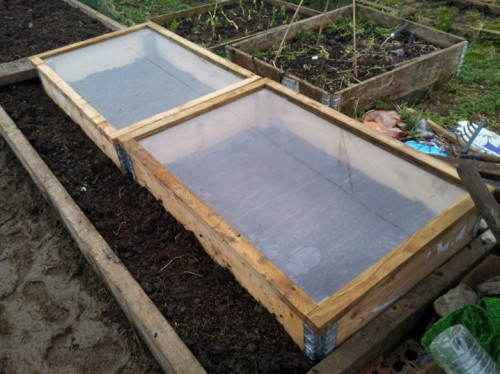 Cold frames provided by the allotment owners.
